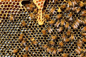 What is the difference between raw and processed honey?