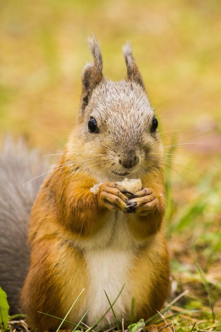 Blind Squirrel Finds A Nut Gif : blind, squirrel, finds, Blind, Squirrel, BLINDS