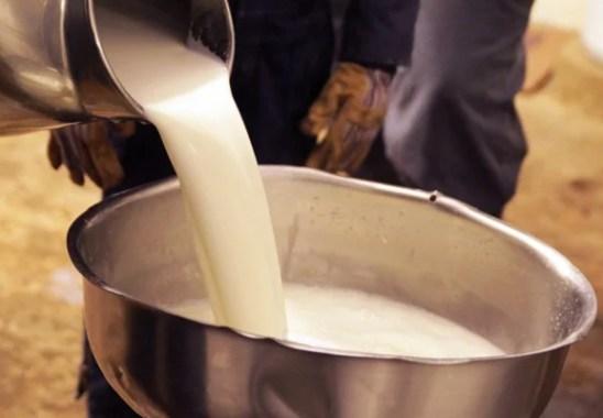 Organik Süt Satarak Para Kazanmak