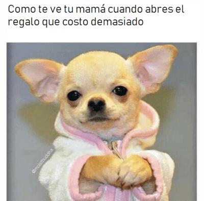 Memes chihuahua regalo
