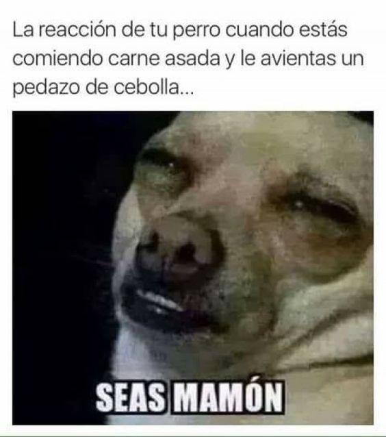 Memes De Chihuahuas De 2018 Para Compartir Con Tus Amigos