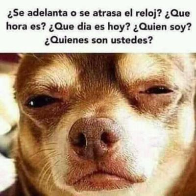meme de chihuahuas 18