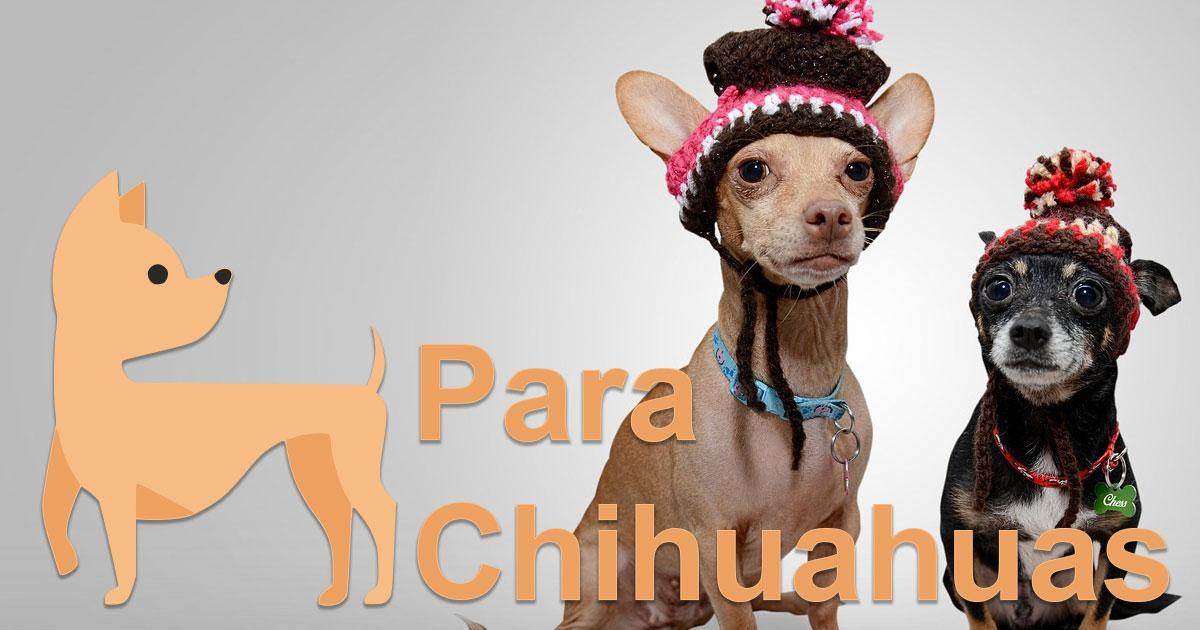 Casas Para Chihuahuas Para Chihuahuas
