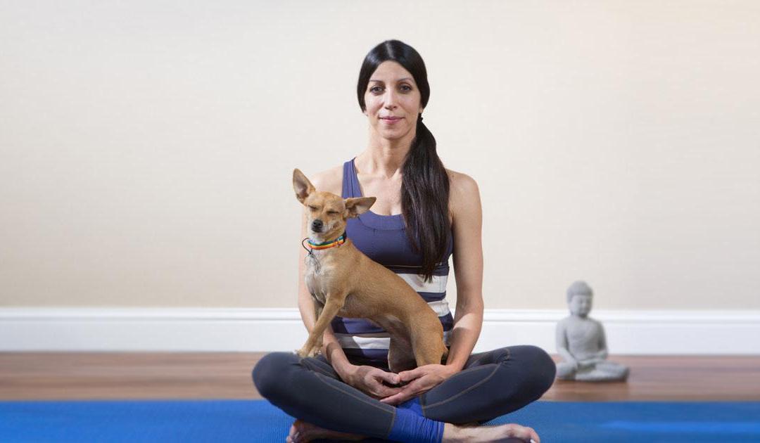 Como hacer yoga con tu chihuahua