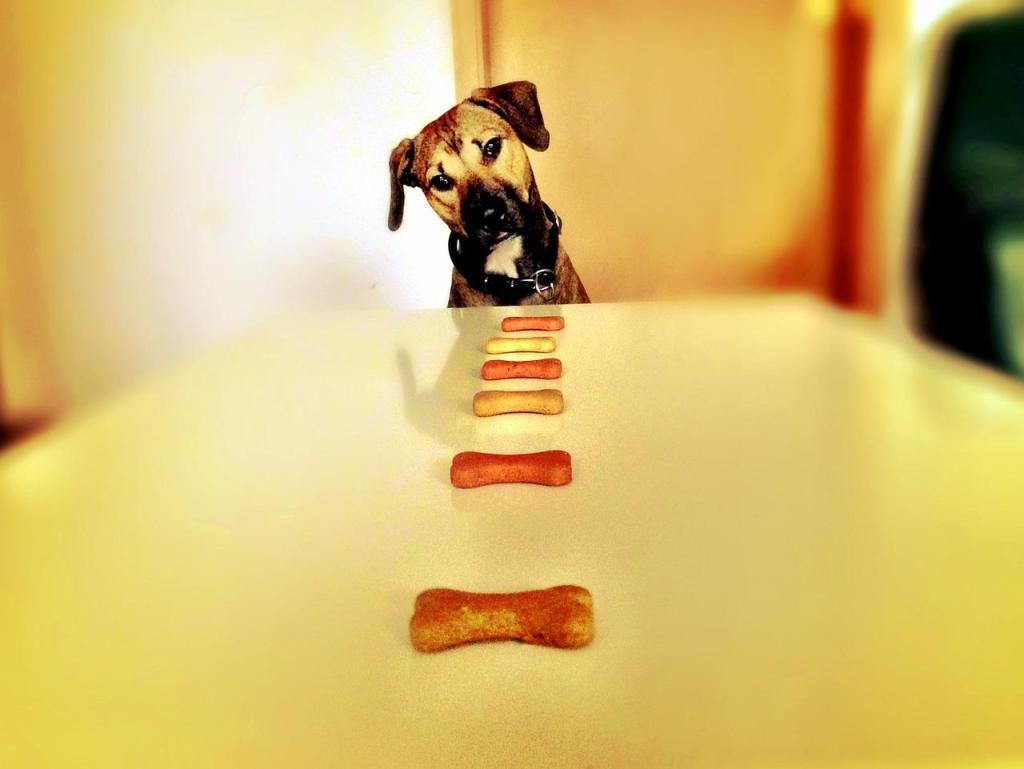 golosina para perro