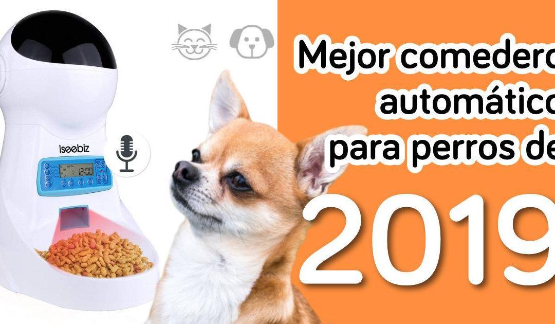Mejor comedero automático para perros de 2019