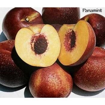 Panamint nectarine