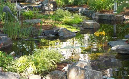 Pond Pictures Ideas