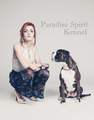 Paradise Spirit Boxer Kennel