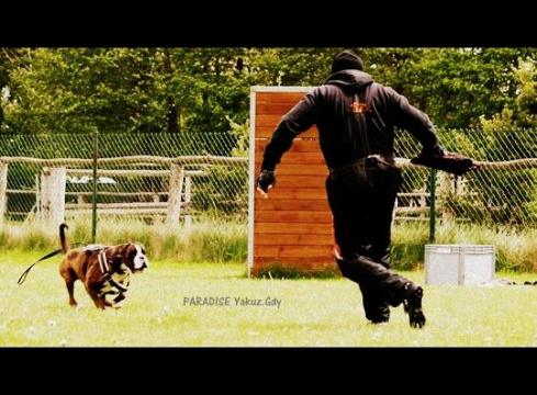 PARADISE Yakuza-Gdy – IPO train. Paradise Spirit Kennel