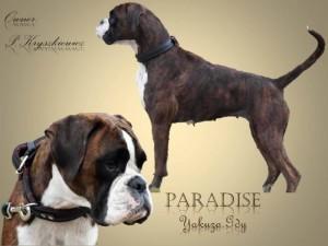 Paradise Yakuza-Gdy