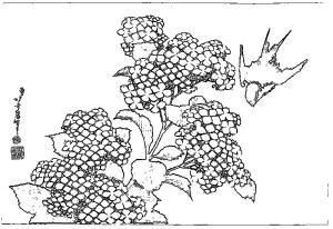 葛飾北斎 Katsushika Hokusai 塗り絵 coloring 浮世絵 ukiyo-e_Hydrangea and Swallow-rinkaku02