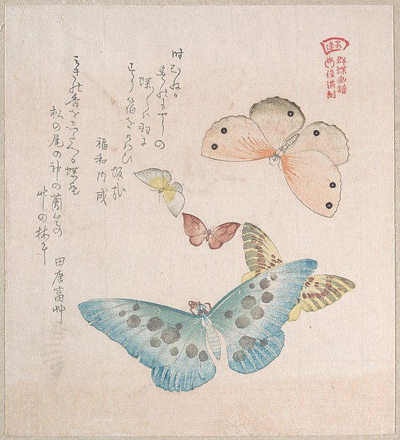 Kubo Shunman_Various Moths and Butterflies-01