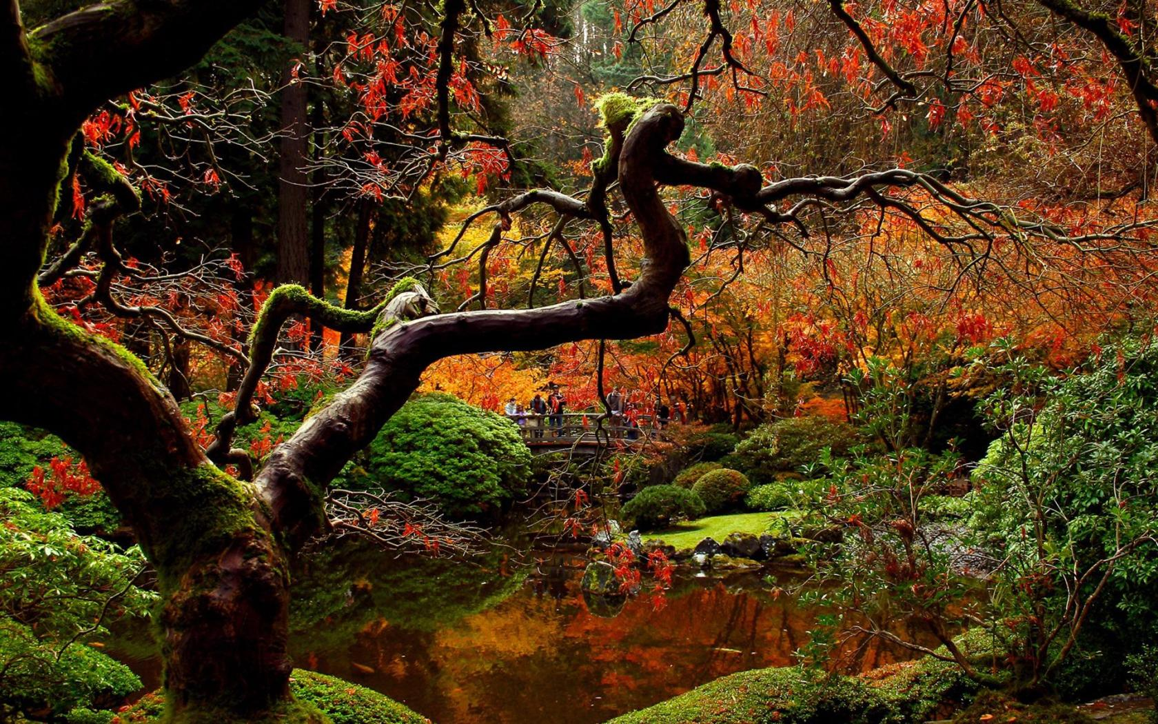 Fall Leaves Live Wallpaper Iphone Your Life As A Zen Garden Paradoxical Wisdom