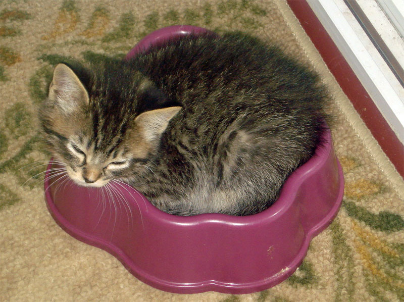 Image result for cats sleeping in their food