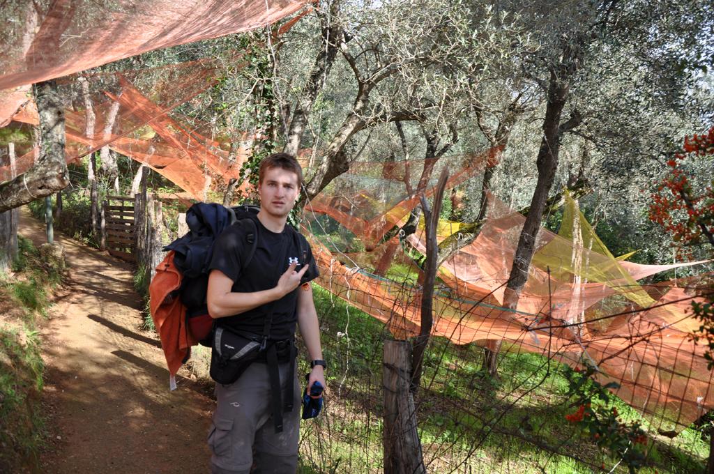 W gaju oliwnym