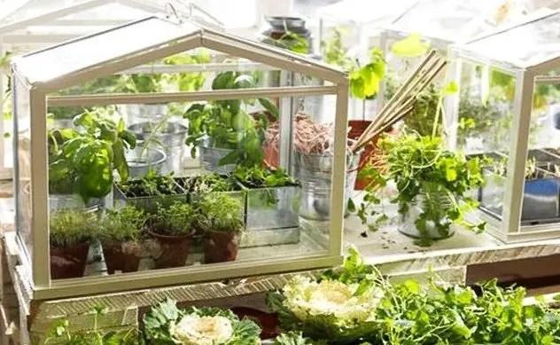 10-ideias-mini-horta