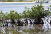 Frenará la ANP en Quintana Roo 27,000 habitaciones