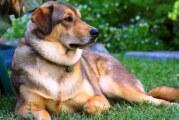 Envenenamiento de perros, ilícito común en Bahía de Banderas