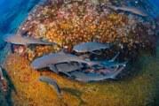 CUCosta exhibirá premier de documental de National Geographic