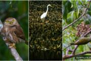 Histórico Conteo Navideño de Aves en San Blas