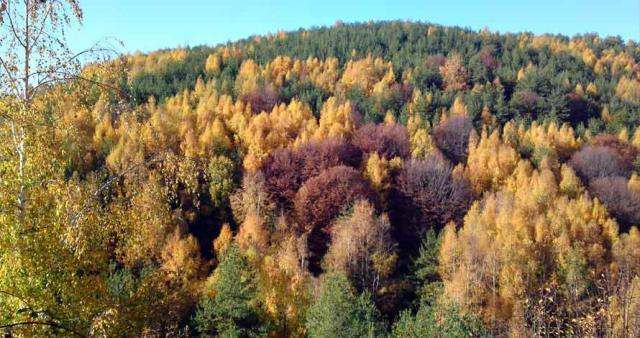 haintou_forest