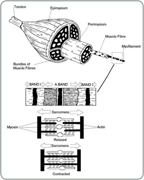 Level 2 Anatomy and Physiology Quiz Mock Paper: Part 4 of 4