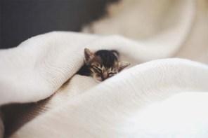 Lamentablemente una mañana no despertó, se fue rodeado de amor y cariño...
