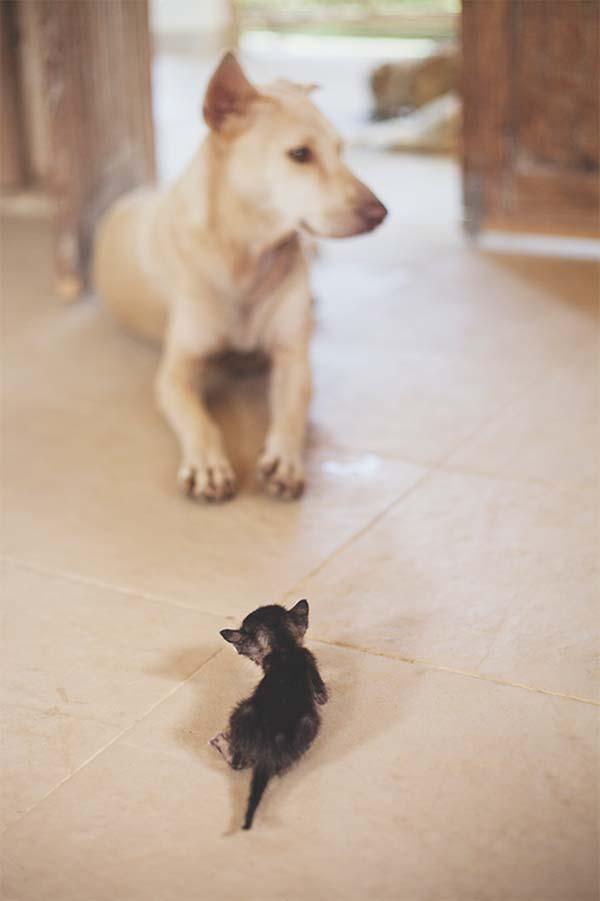 Se hizo buen amigo del perro