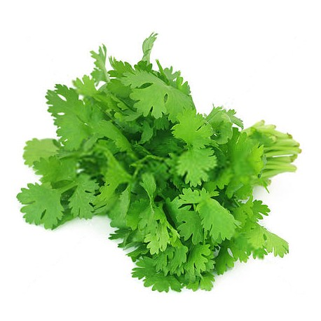 Image result for cilantro leaves