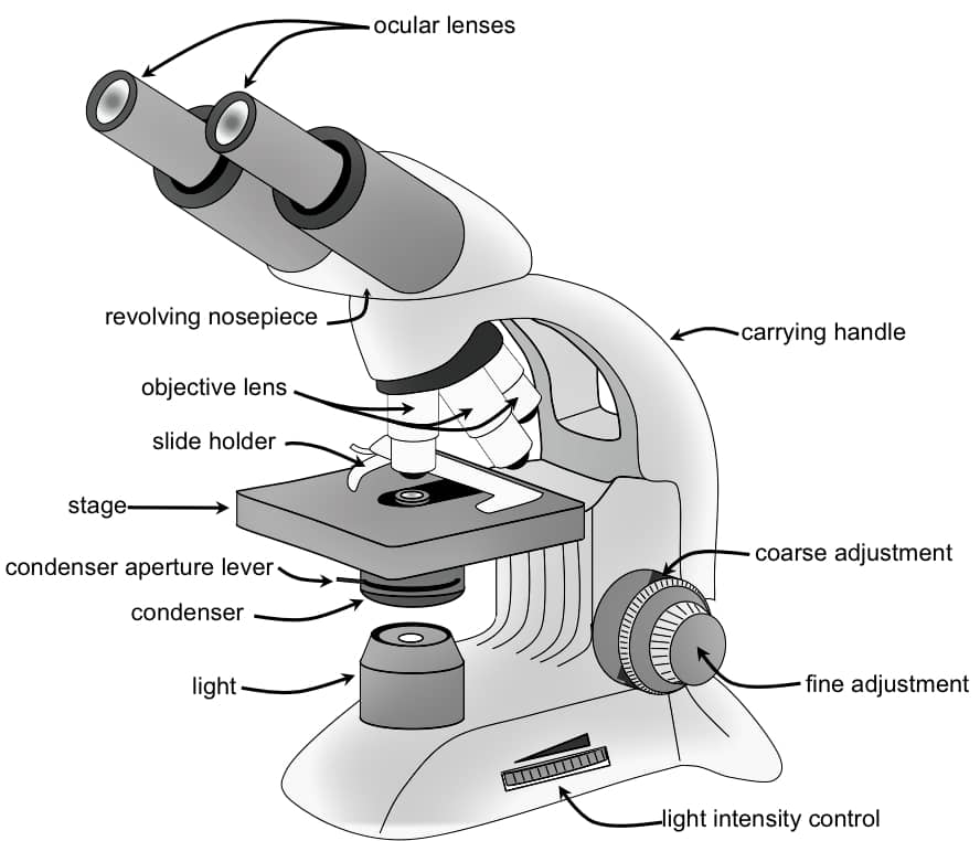 binocular compound microscope diagram simple easy plant cell animal light optical or lab information