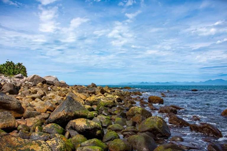 Pesquisadores da UFPR descobrem espécie de molusco que só existe em arquipélago paranaense