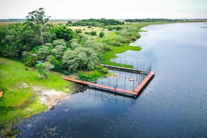 Mutuns doados por Itaipu têm primeira ninhada na Argentina