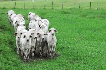 Portobello Resort & Safári realiza leilão de gado virtual