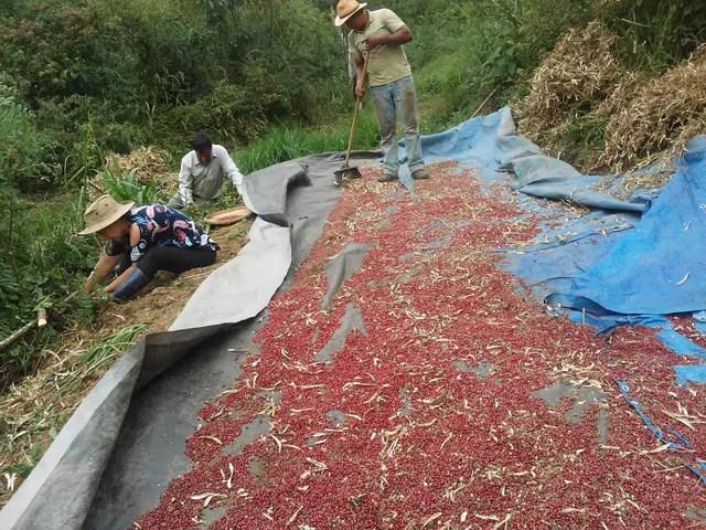 Viva o Feijão estimula a produção diferenciada e novos hábitos de consumo