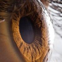 21 Extreme Close Ups of the Human Eye