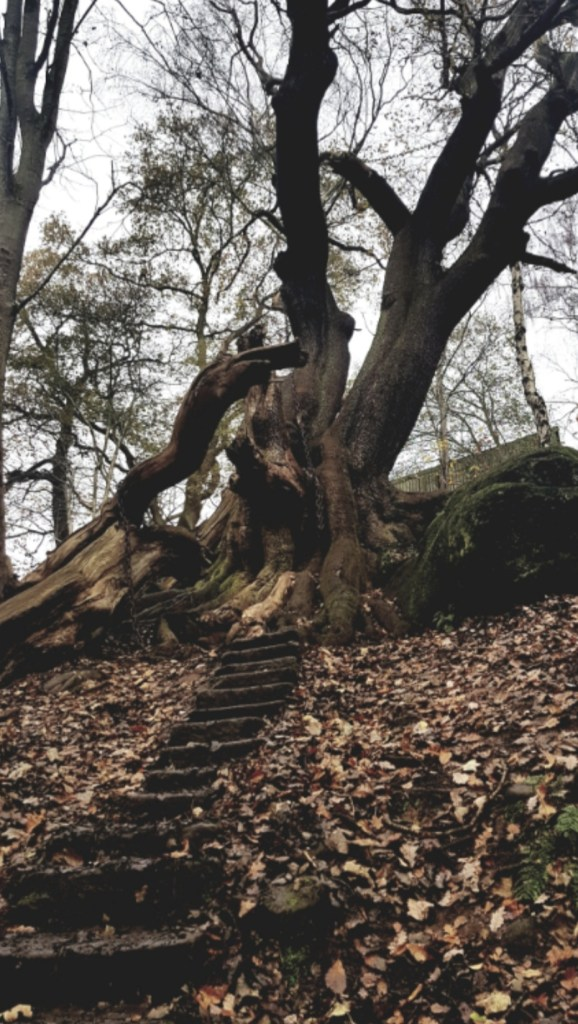 The Chained Oak Tree Alton Towers | Is there any truth to the legend