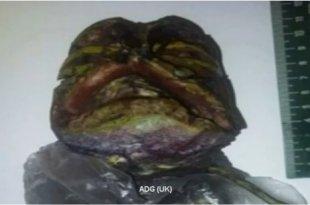 Un nouveau vidéo de l'alien dans un frigo à Petrozavodsk