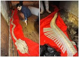 Chine: Découverte d'un squelette de dragon