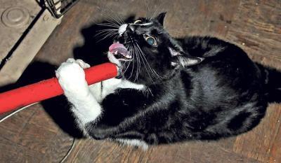 Un chat hors de contrôle tente de fuir la police