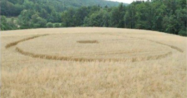 Des cercles de céréales en Slovénie et en République Tchèque