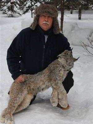 Un homme tue un lynx à mains nues pour sauver ses chiens