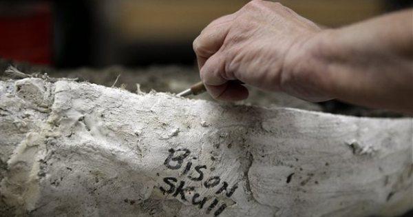 Los Angeles : les travaux de prolongement du métro révèlent des fossiles