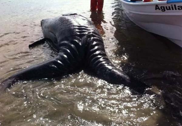 baleine-mutante-2