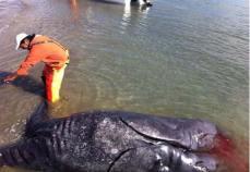 baleine-mutante-4