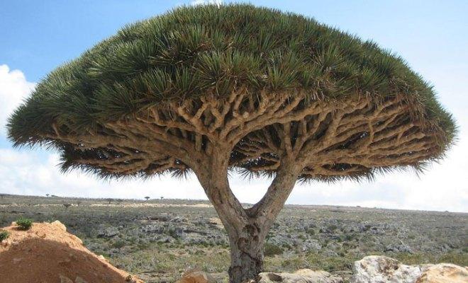 """L'île de Socotra abrite les paysages les plus """"extraterrestres"""" de la Terre"""
