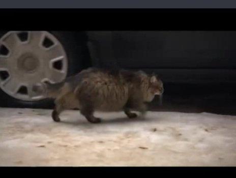Russie : un chat sauve un bébé du froid