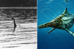 Des scientifiques ont découvert un cousin du monstre du Loch Ness