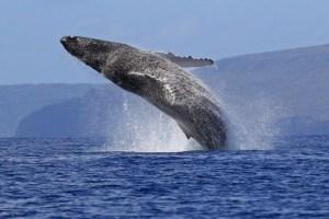 Une canadienne tué par une baleine à Cabo San Lucas, au Mexique