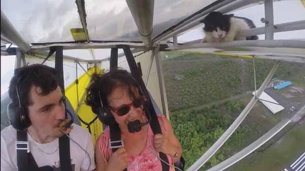 Un avion détournée par un chat errant